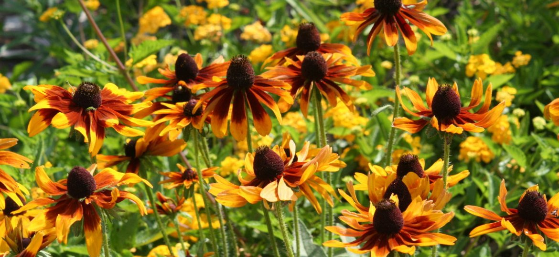 summer_flowers