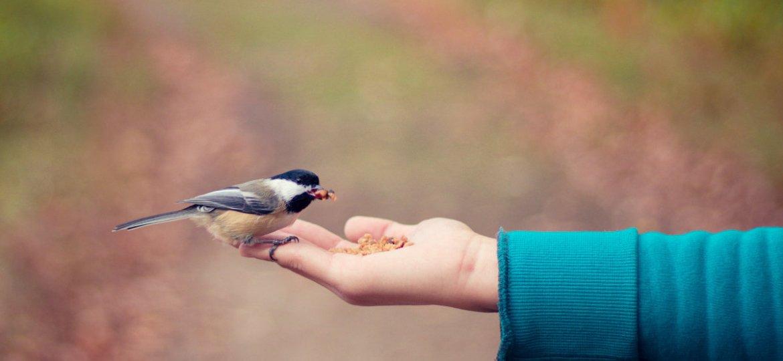 trust_bird