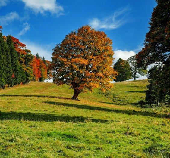 Reframing_trees-3601248_1920